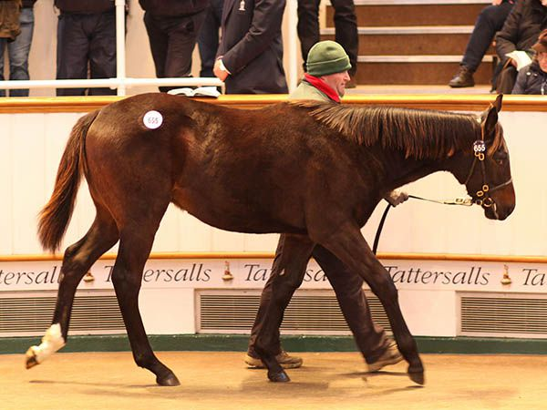 Lot 655: Toronado (IRE) / Raskutani (GB)