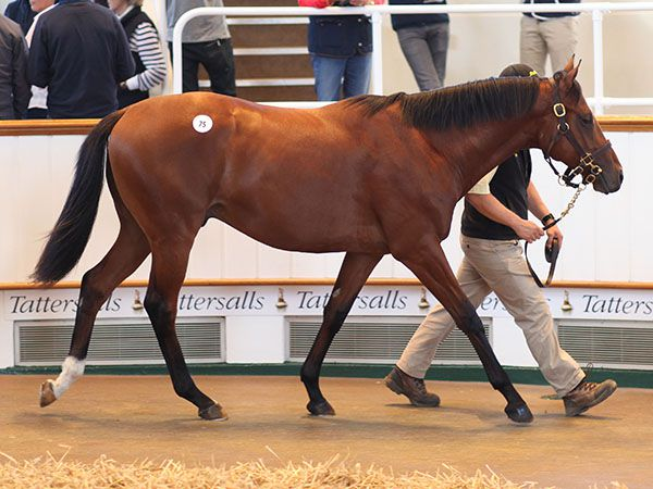 Lot 75: Dubawi (IRE) / Giants Play (USA)
