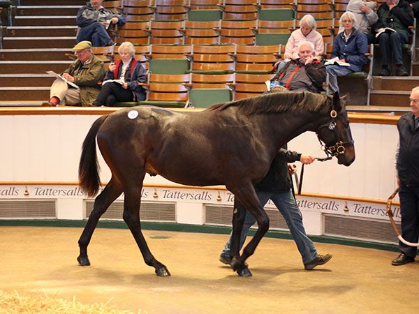 Lot 757: Society Rock (IRE) / Its In The Air (IRE)