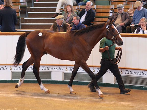 Lot 85: Galileo (IRE) / Gooseberry Fool (GB)