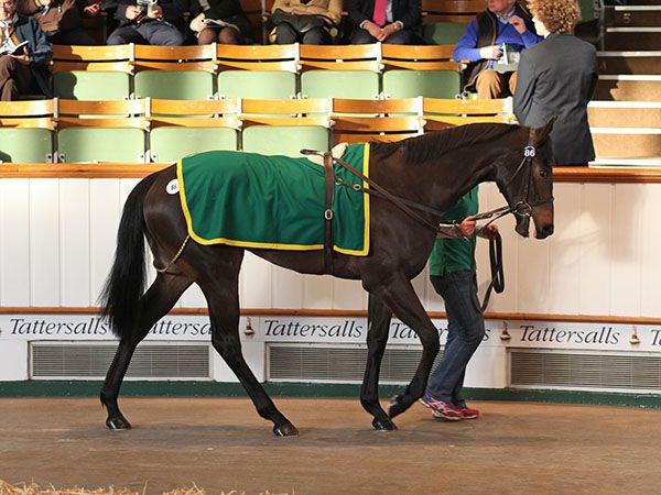 Lot 86: Kyllachy (GB) / Represent (IRE)