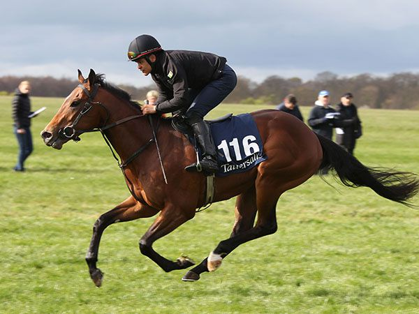 Lot 116: Acclamation (GB) / Clever Millie (USA)