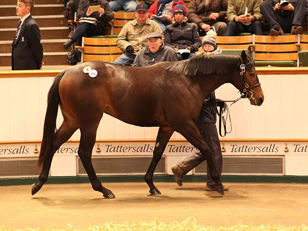 Lot 154: Sea The Stars (IRE) / Green Minstrel (FR)