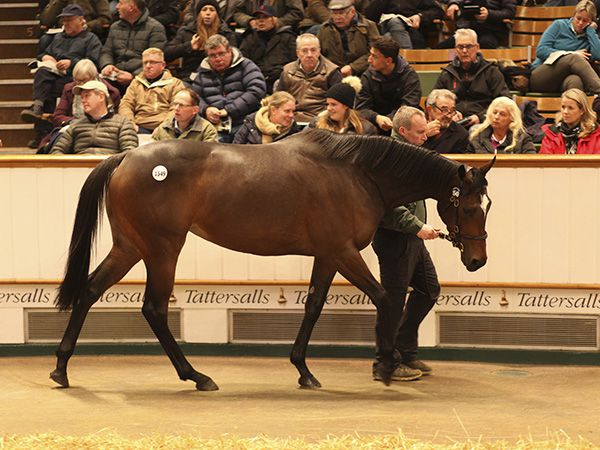 Lot 1549: Intricately (IRE)