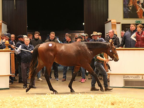 Lot 1583: Sea The Moon (GER) / Diablerette (GB)