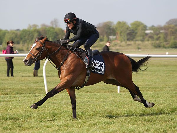 Lot 223: Acclamation (GB) / Zibeling (IRE)