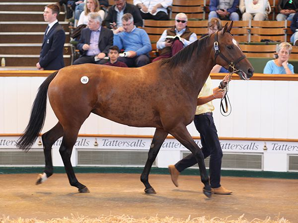 Lot 253: What Say You (IRE)