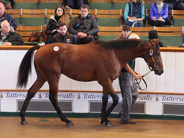 Lot 347: Dubawi (IRE) / Attraction (GB)