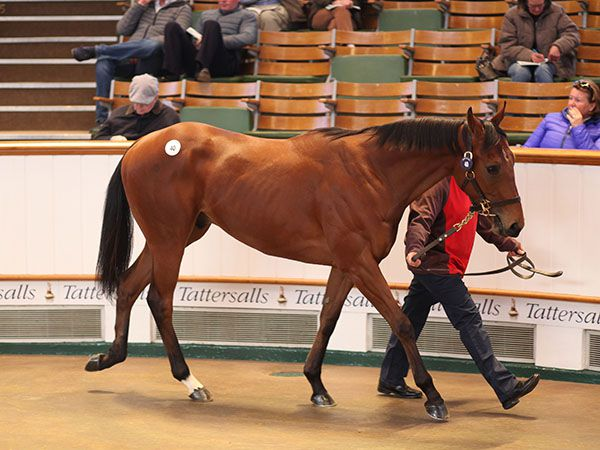 Lot 40: Exceed And Excel (AUS) / Please Sing (GB)
