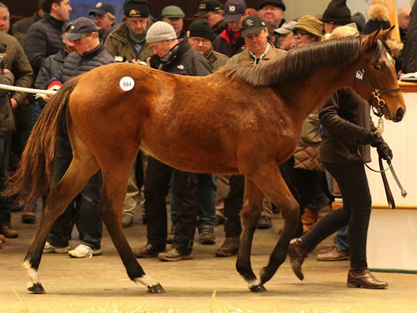 Lot 664: Acclamation (GB) / Party Whip (IRE)