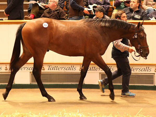 Lot 722: Sea The Stars (IRE) / Penny Post (IRE)