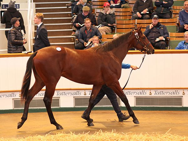 Lot 918: Australia (GB) / Thai Haku (IRE)