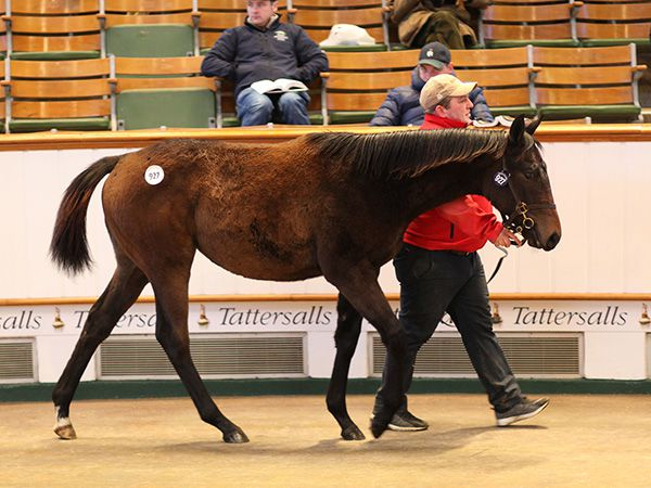 Lot 927: Dark Angel (IRE) / Indigo Lady (GB)