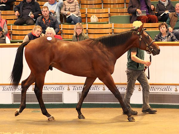 Lot 949: Zebedee (GB) / Varenka (IRE)