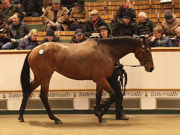 Lot 152: Pocketfullofdreams (FR)