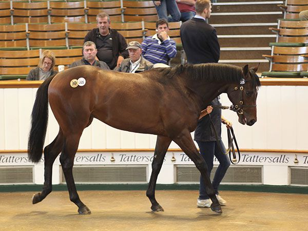 Lot 305: Dutch Art (GB) / Lady Darshaan (IRE)