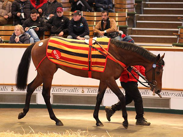 Lot 370: Originaire (IRE)