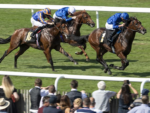 Al Hilalee winning at Newmarket