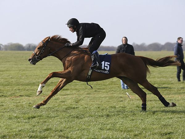 Lot 15: Night of Thunder (IRE) / Sunset Avenue (USA)
