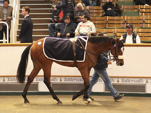 Lot 41: Farhh (GB) / Anything Goes (IRE)