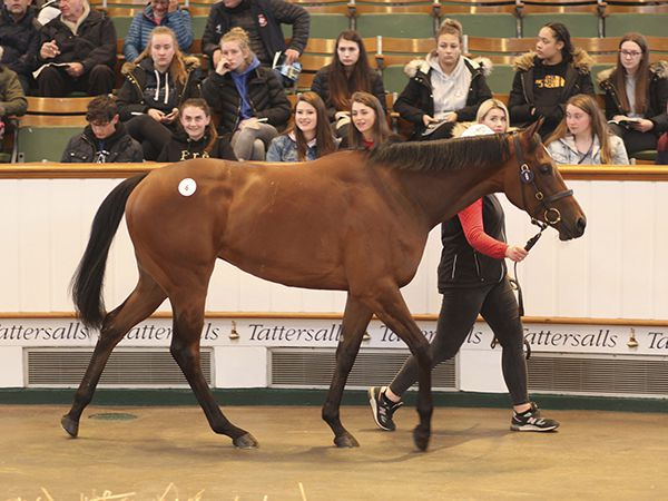 Lot 6: Kingman (GB) / Shyrl (GB)
