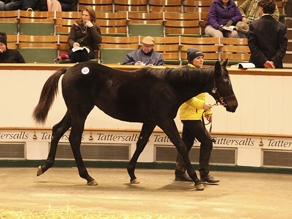 Lot 403: No Nay Never (USA) / Velvet Ribbon (IRE)