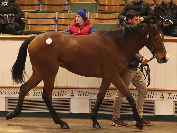Lot 171: Kodiac (GB) / Lake Nona (GB)