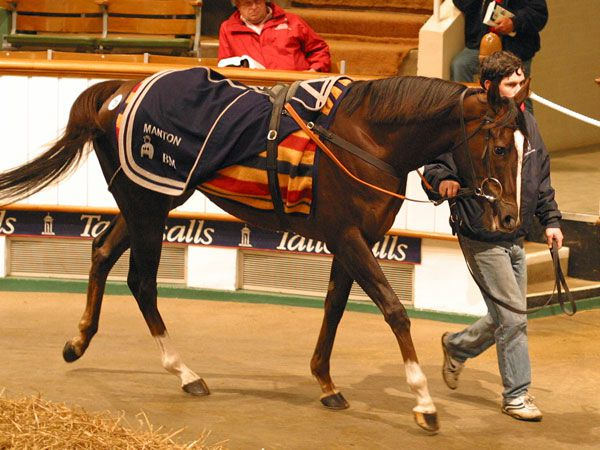 Donna Blini Selling at the 2006 Tattersalls December Mare Sale