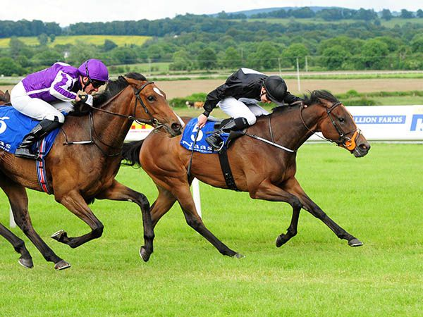 Drumfad Bay Scores on Debut at Naas
