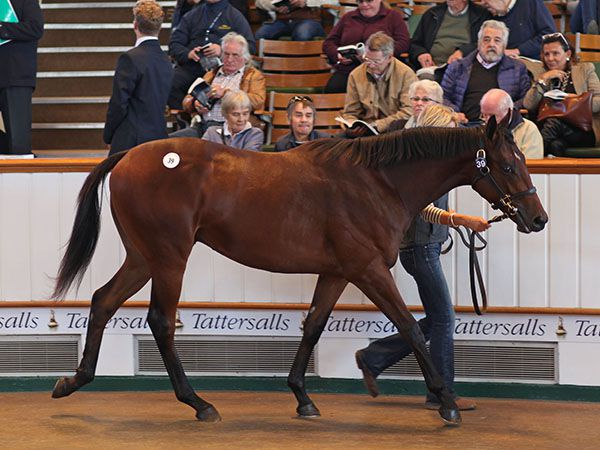 Glorious Journey selling as a yearling