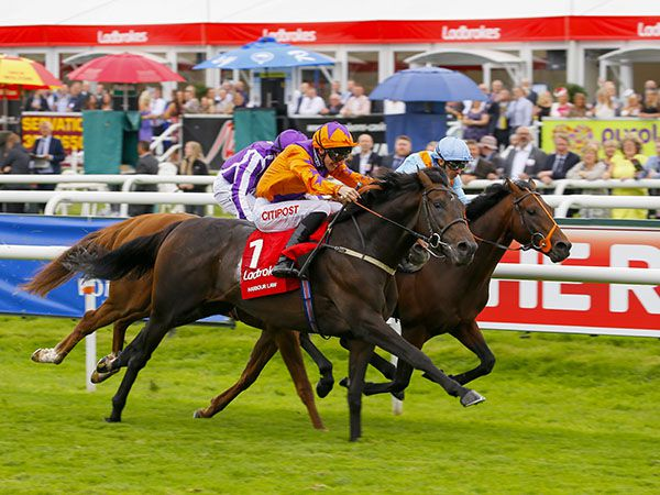 G1 St Leger winner Harbour Law's dam was purchased for 40,000 gns at the February sale.
