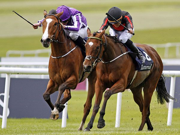 Jet Setting Holds off Minding to win the Tattersalls Irish 1,000 Guineas (Copyright Steve Cargill)