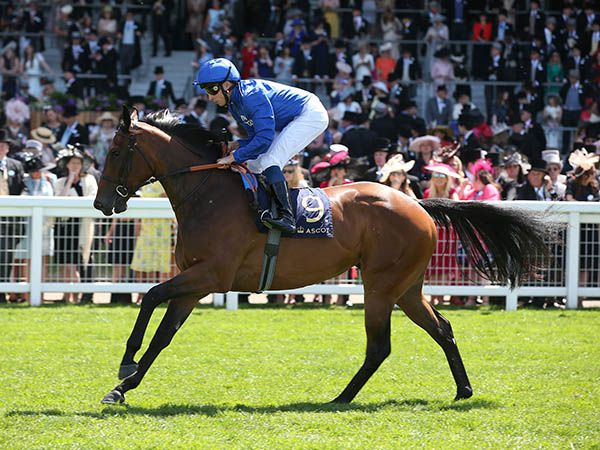 G1 winner La Pelosa was purchased at last year's Craven Breeze Up Sale