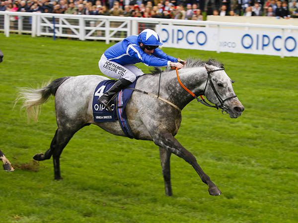 G1 British Champions Sprint winner LIBRISA BREEZE was purchased for 90,000 Guineas