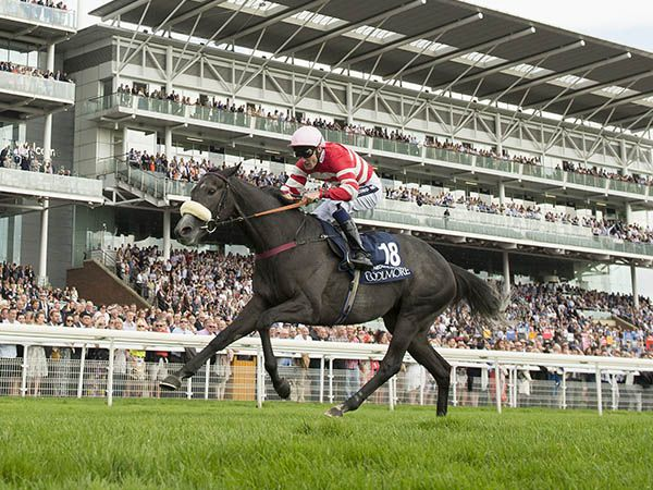 16,000 gns October Book 2 purchase MECCA'S ANGEL winning the G1 Nunthorpe Stks