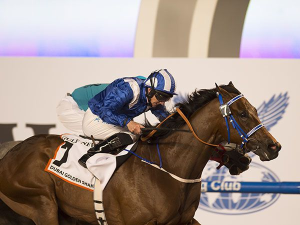 Muarrab Winning the G1 Dubai Golden Shaheen (Photo Copyright Ed Whitaker)