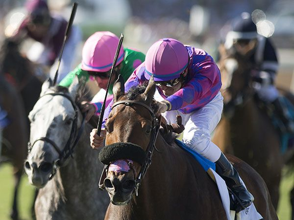 Obviously wins the G1 Breeders' Cup Turf Sprint (Copyright: Edward Whitaker)