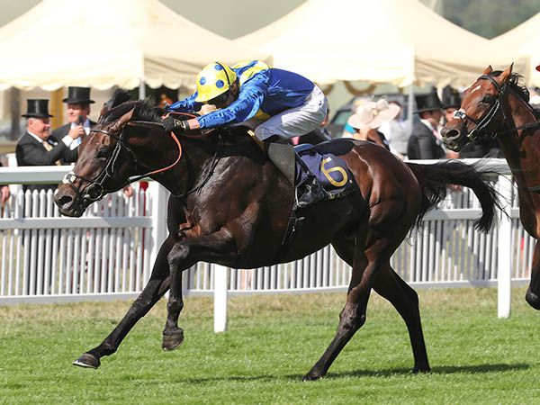 G1 Prince of Wales's Stakes winner POET'S WORD was a 300,000 guineas Book 2 purchase.