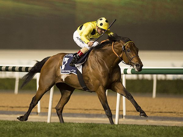 Postponed Winning the G1 Dubai Sheema Classic (Photo Copyright Ed Whitaker)
