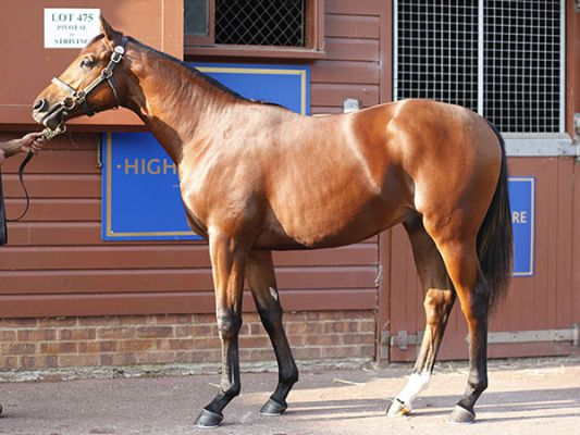 Red Label as a yearling at Tattersalls
