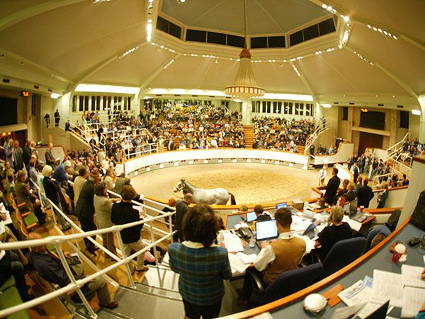 The Tattersalls Sale Ring
