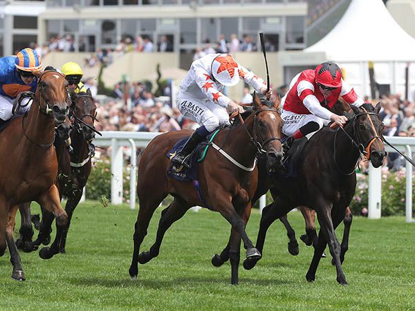 G2 Queen Mary Stakes winner SIGNORA CABELLO was a 20,000 gns purchase