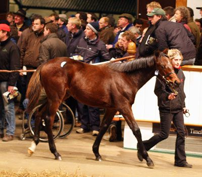 TREASURE BEACH being sold as a foal at Tattersalls