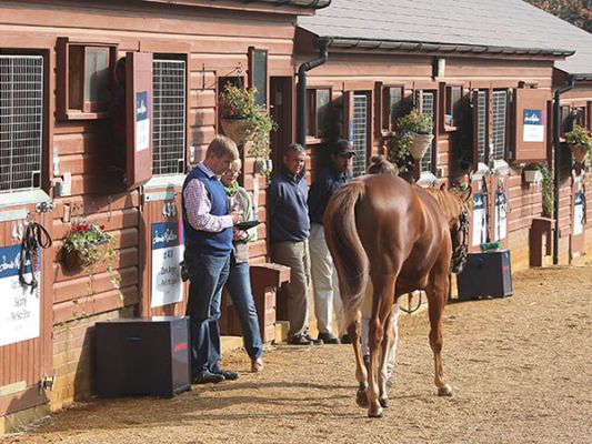 William Muir Inspecting Yearlings at Tattersalls
