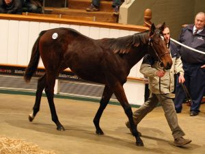 Lot 1012: Sea The Stars (IRE) / Ecoutila (USA)
