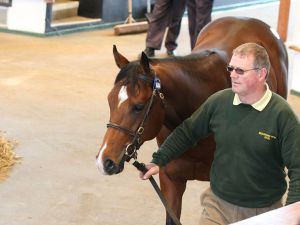 Lot 1444: Sakhee's Secret (GB) / Coffee Time (IRE)