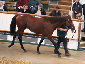 Lot 88: Montjeu (IRE) / Lucina (GB)