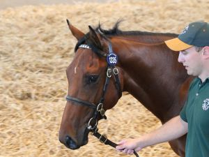 Lot 1335: Fastnet Rock (AUS) / Green Castle (IRE)