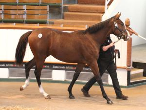Lot 1673: Dutch Art (GB) / Bye Bold Aileen (IRE)