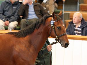 Lot 354: Oasis Dream (GB) / Dar Re Mi (GB)